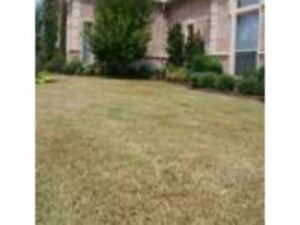 poor grading yard - we highly recommend a 1 yr warranty rept